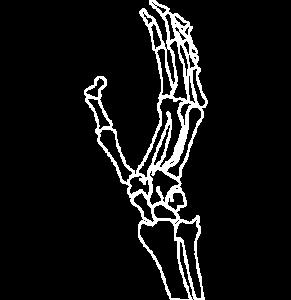 Osteo Arthritis logo